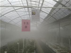 深圳大棚养殖蔬菜加湿设备