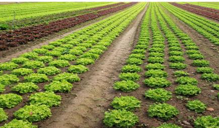 农业物联网对产业发展究竟有何作用?