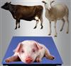 scs生猪磅秤 猪出栏称重地磅